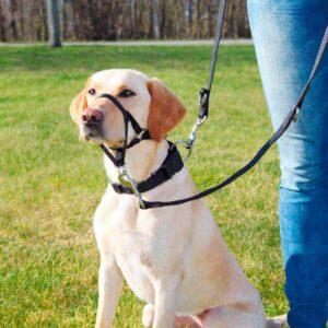 AÇAIME TREINO 31 CM TAM L - Açaimes - Produtos para cão